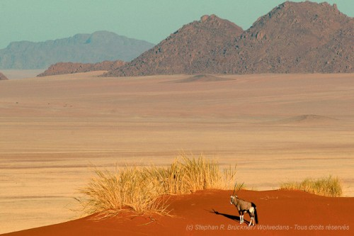 NamibRand Nature Reserve et Wolwedans, en Namibie