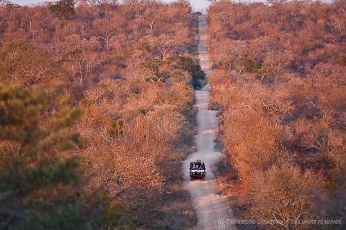 Quelques pistes à suivre dans le Parc Kruger