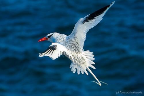 Photographier les oiseaux de bord de mer