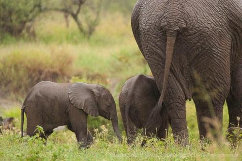 Fabuleux, extraordinaire voyage en Tanzanie !