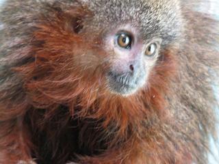 Encore une bonne nouvelle : 441 espèces ont été découvertes en 4 ans en Amazonie