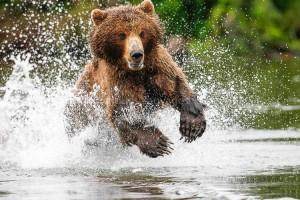 Les ours et volcans du Kamtchatka avec Rémy Marion