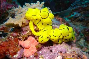 Croisière plongée Iles Salomon