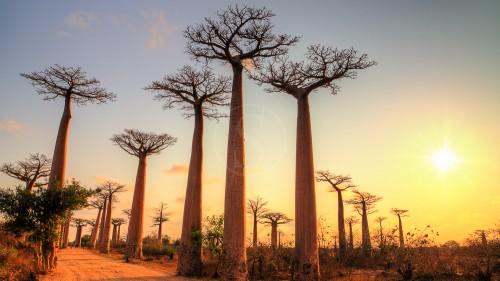 Golf, Etendues Sauvages partenaire du 1er Trophée de Madagascar
