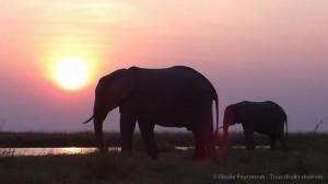 Eléphants et rhinos s'invitent à la table du vétérinaire