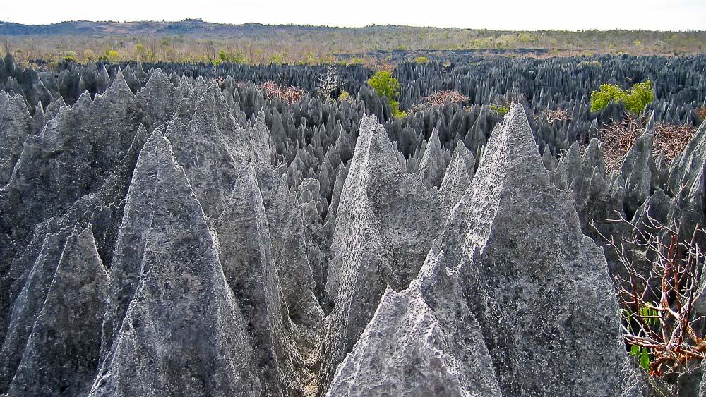 La saison idéale pour découvrir Madagascar