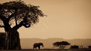 Kwihala Ruaha, Tanzanie