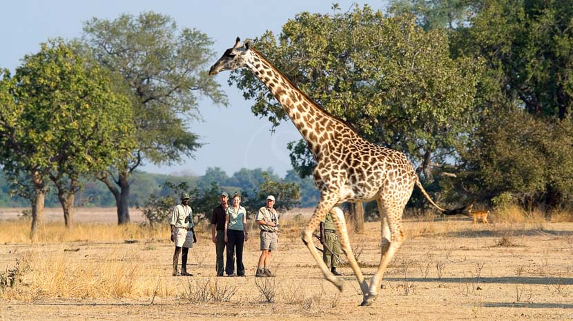Robin Pope Safaris, Zambie