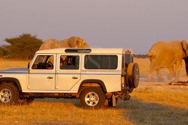 Safari en Afrique avec voiture de location
