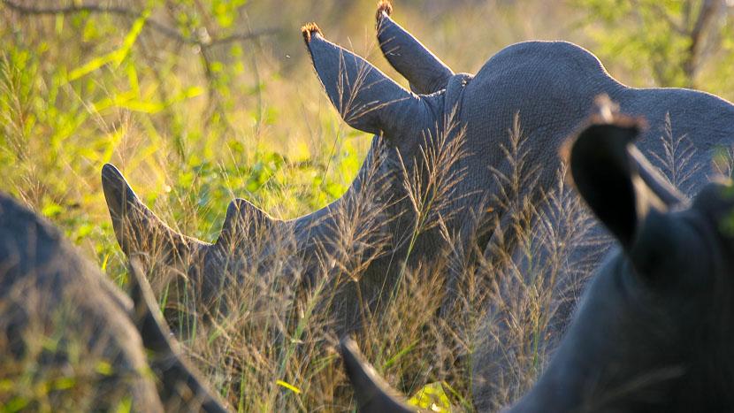 Photographier dans le Parc Kruger, en Afrique du Sud