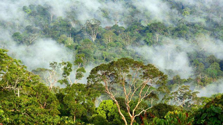 Vallée de Danum, Malaisie