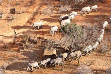orphelinat des éléphants Daphne Sheldrieck Tsavo