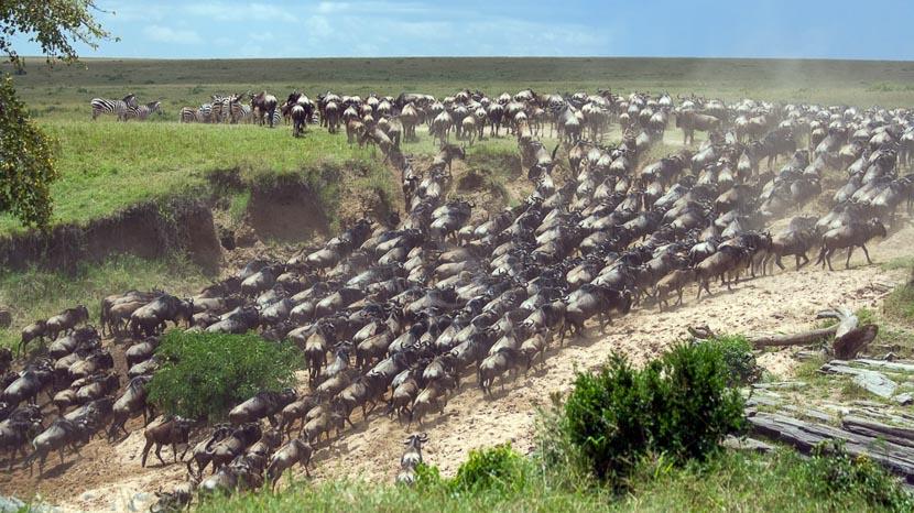 Chroniques animales au Serengeti: PART 1/5 & 2/5