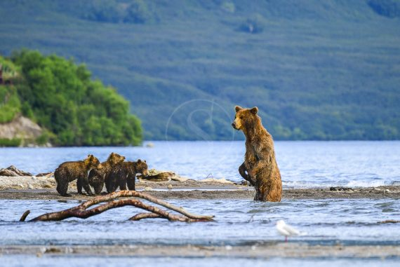 Lac Kourile Kamtchatka © Shutterstock
