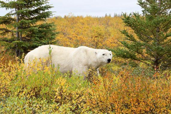 Nanuk Bear Lodge, Canada