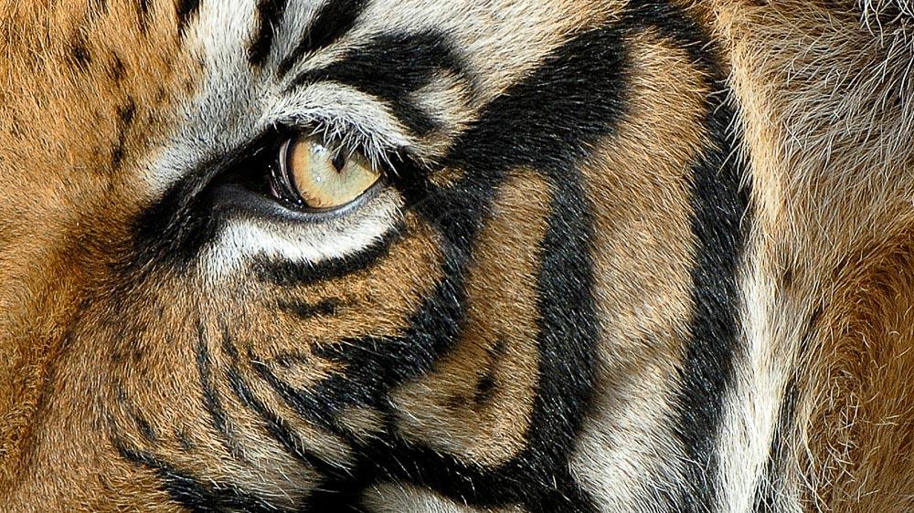 Avec Alain Pons, dans l'œil du tigre