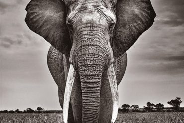 Elephant Dream à Saint-Germain-en-Laye