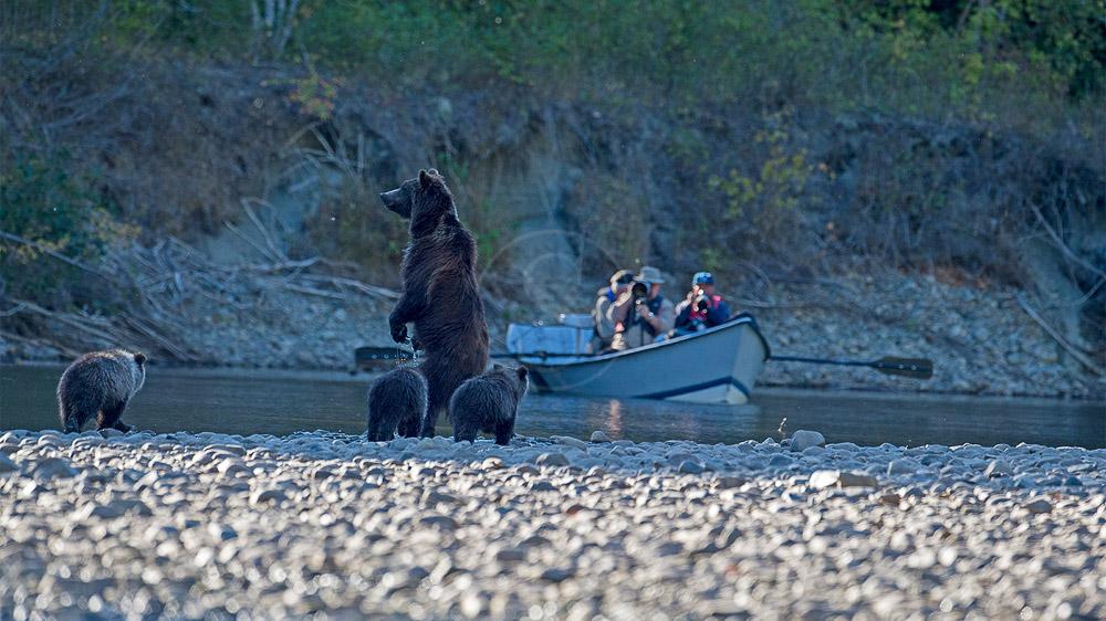 Un automne chez les ours bruns