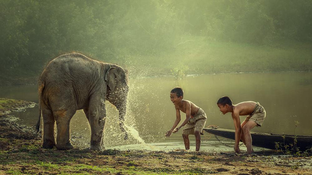 Centres de protection des éléphants au Laos