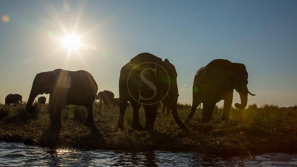 Chobe au Botswana, safari sur l'eau