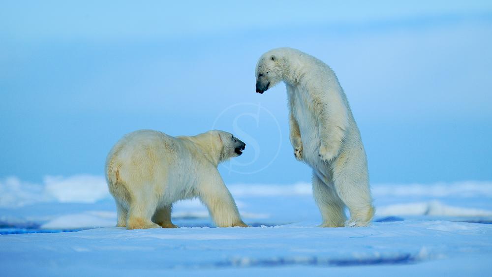 Arctique ou Antarctique = Offres exceptionnelles