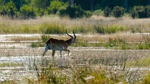 Delta de l'Okavango © Etendues Sauvages