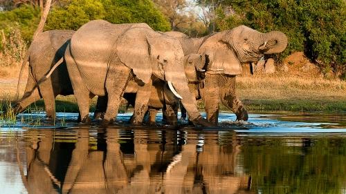 Safari au Botswana © Alain Pons