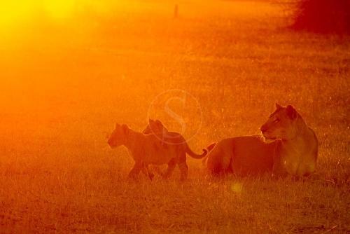 Safari à Chobe, Botswana © Etendues Sauvages