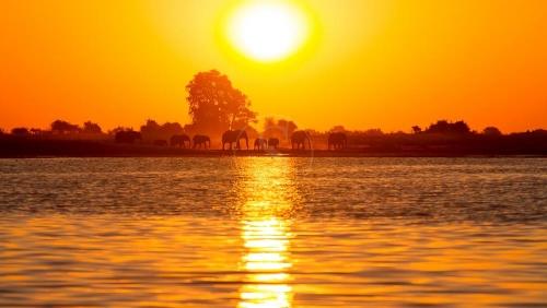 Safari à Chobe © Etendues Sauvagesbotswana lg chobe safari 037