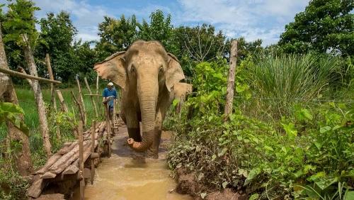 MandaLao Elephant Conservation, Laos © Etendues Sauvages