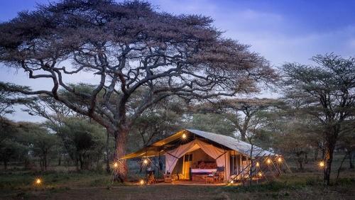 Akiba Kibwe Serengeti, Tanzanie