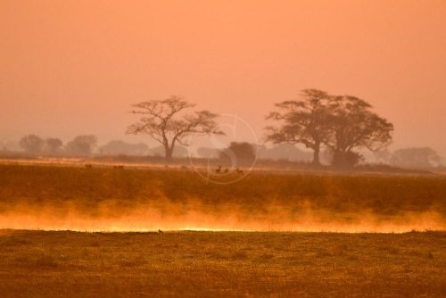 Safari en Zambie © Ludovic R.