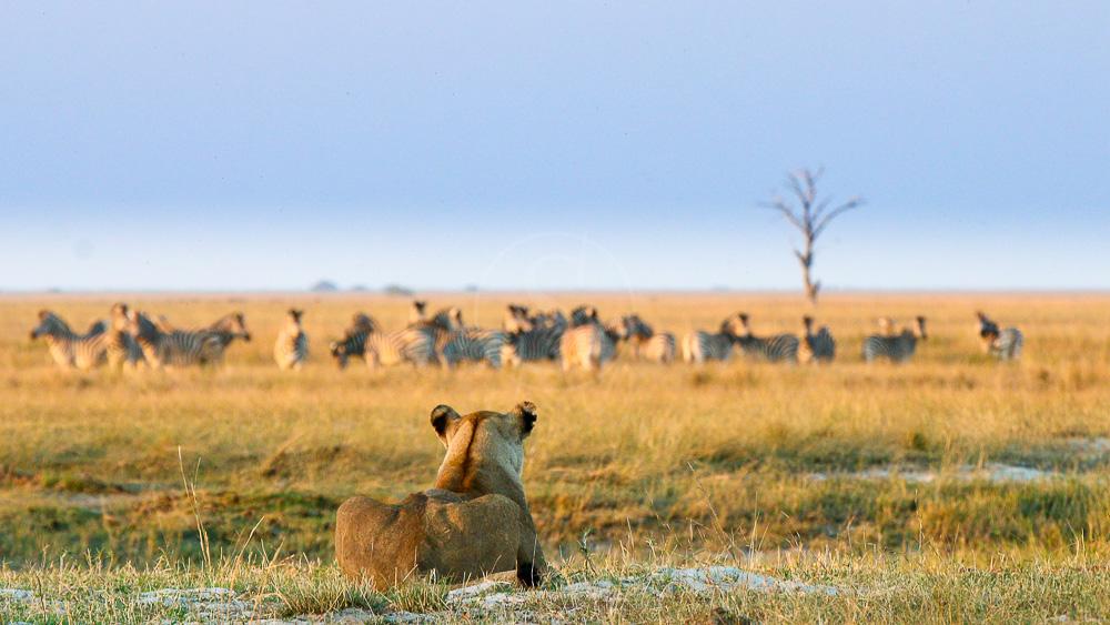Chobe Game Lodge, Botswana © Desert & Delta