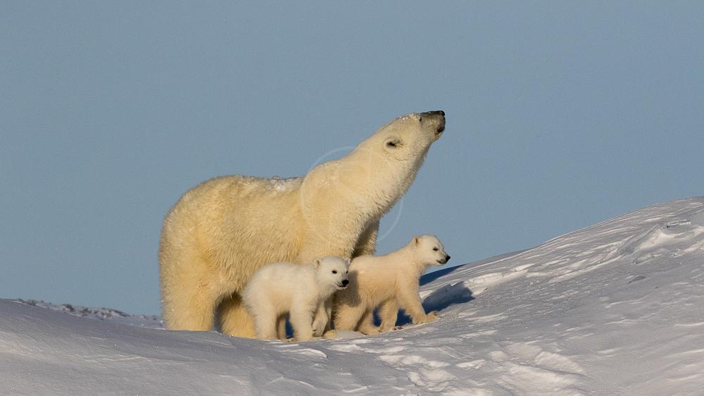 Expédition sur la Terre de Baffin © Dave Briggs