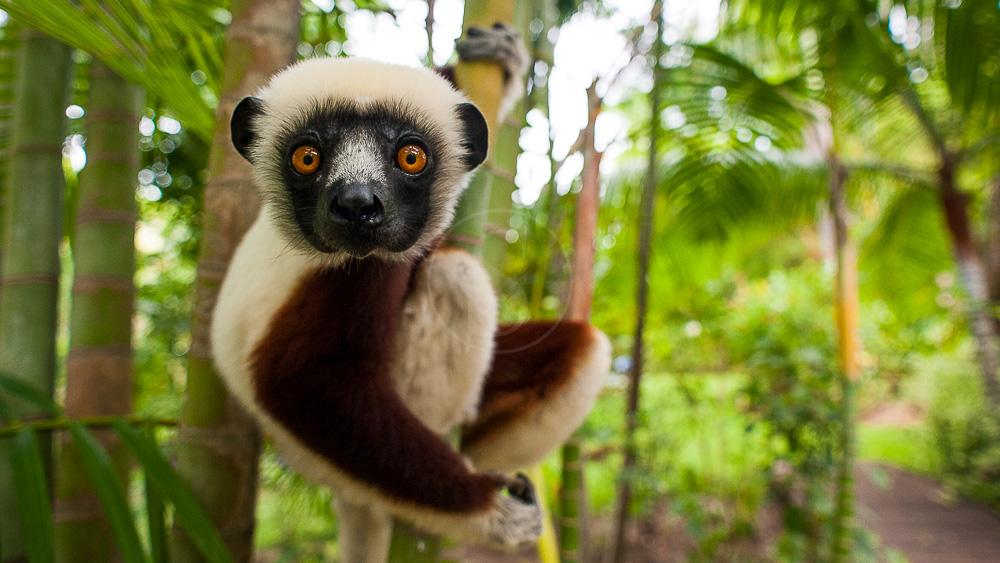 Anjajavy Lodge, Madagascar © Anjajavy