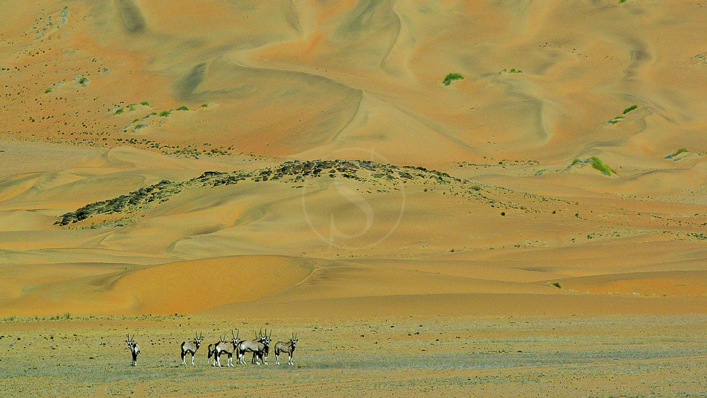 Serra Cafema Lodge, Namibie © Dana Allen - Wilderness