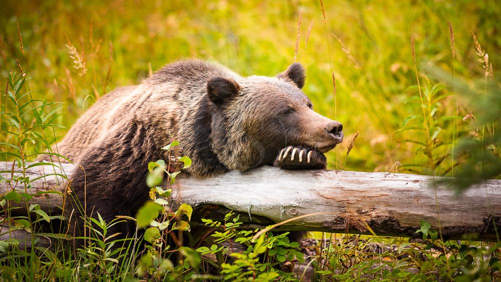 Région de Banff dans l'Alberta, Canada
