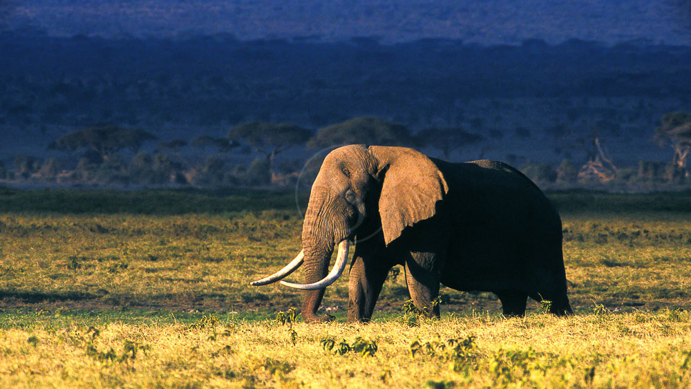 Safari au Masai Mara, Kenya © &Beyond