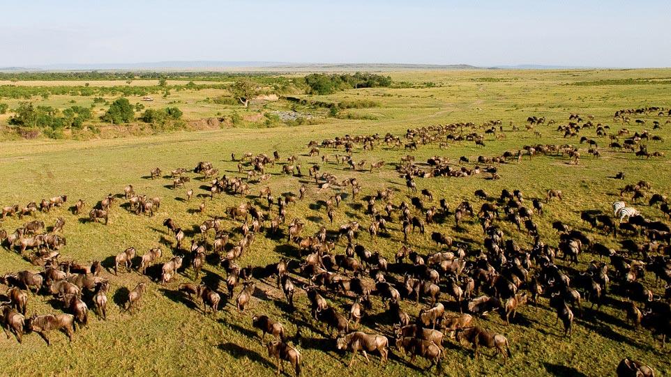 Safari au Kenya © M.Denis-Huot / Fornier