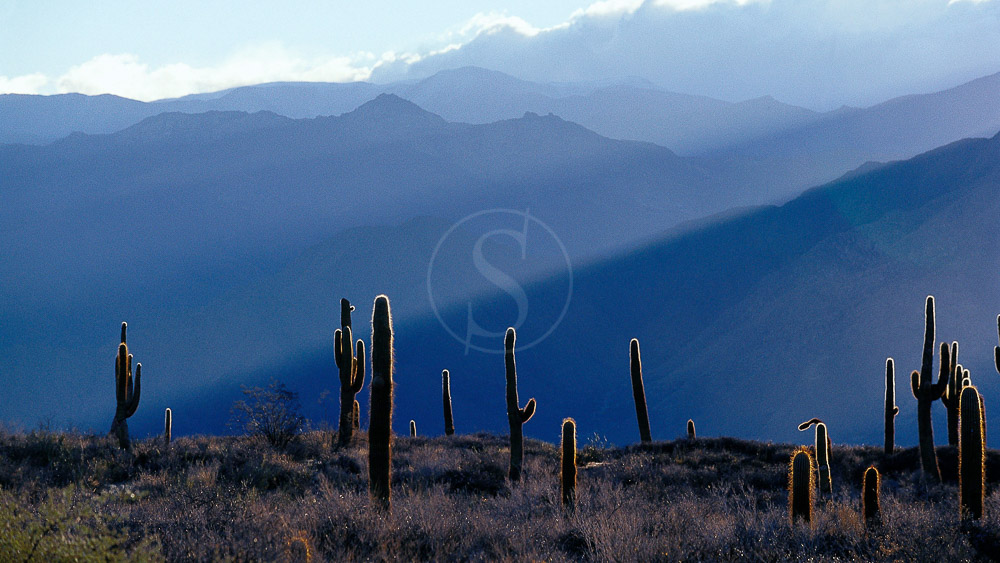 Ambiance d'Argentine © O. Dufeu