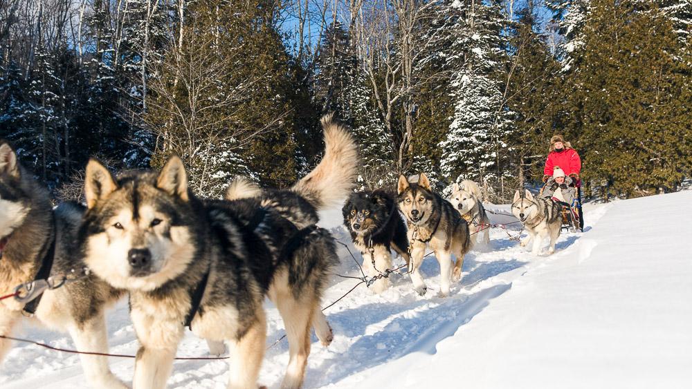 Traineau à chiens en Sacacomie, Canada © Etienne Boisvert