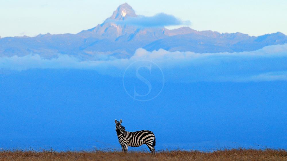Kicheche Laikipia Camp, Kenya