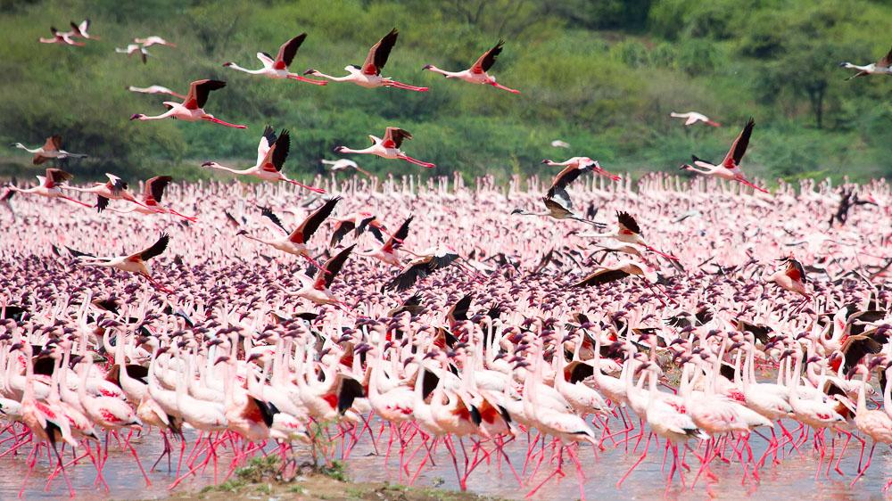 Ambiance du Lac Nakuru, Kenya