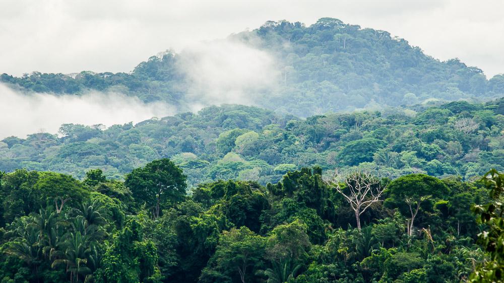 Parc de Soberania, Panama