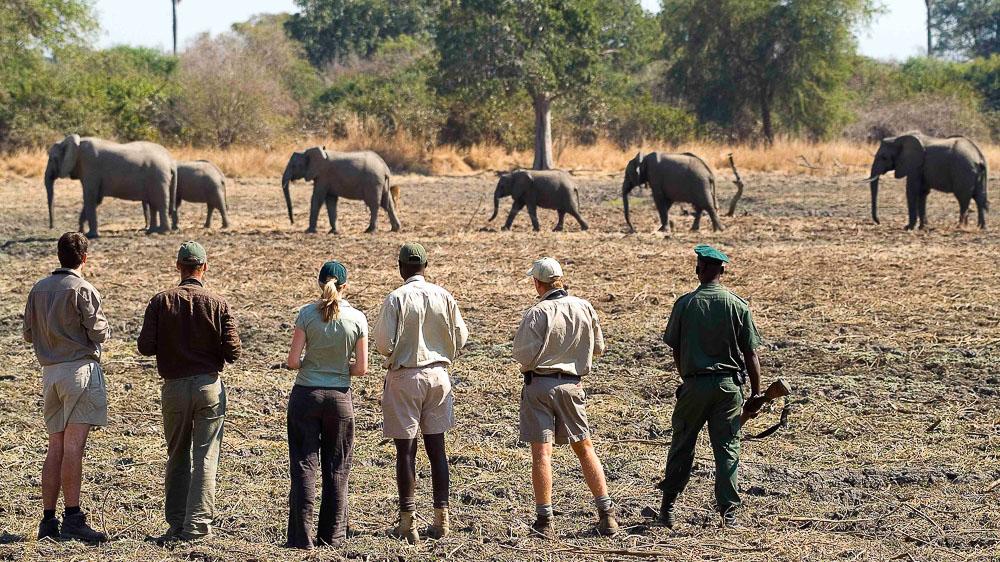 Safari à South Luangwa, Zambie © Robin Pope Safaris