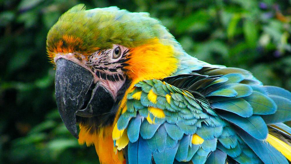 Forêt Amazonienne, Brésil