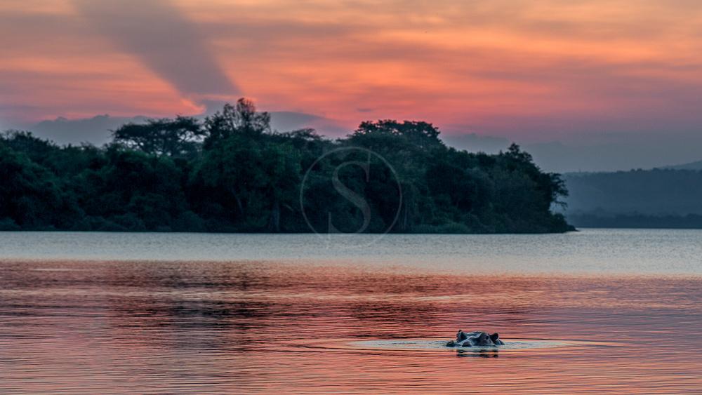 Hippo Sunset ! Sur le lac Mburo, Ouganda