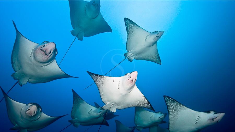 Cocos Island, Costa Rica © Edwar Herreño Undersea Hunter