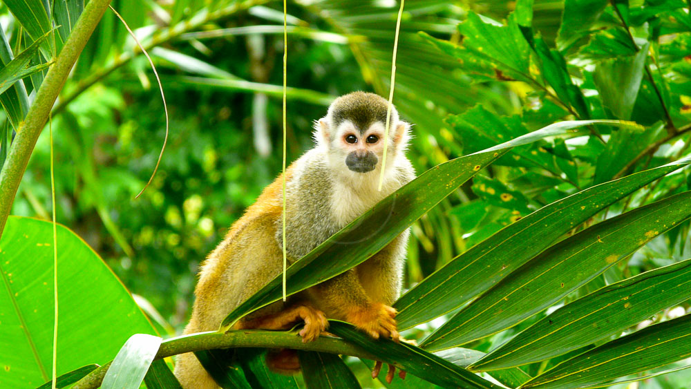 Manuel Antonio, Costa Rica