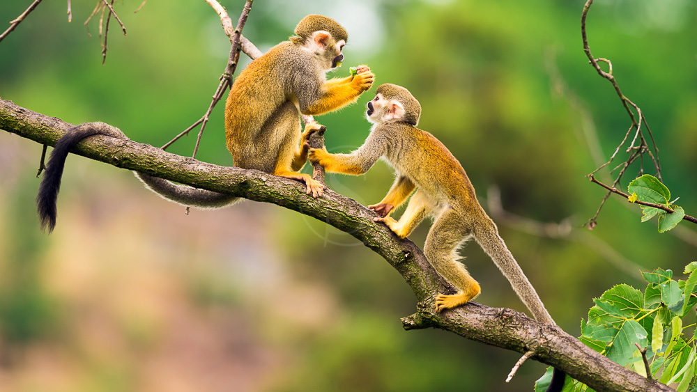 Amazonie équatorienne, Equateur